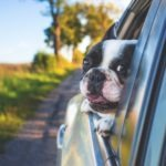 12 Best Seat Covers For Dog Hair Reviews