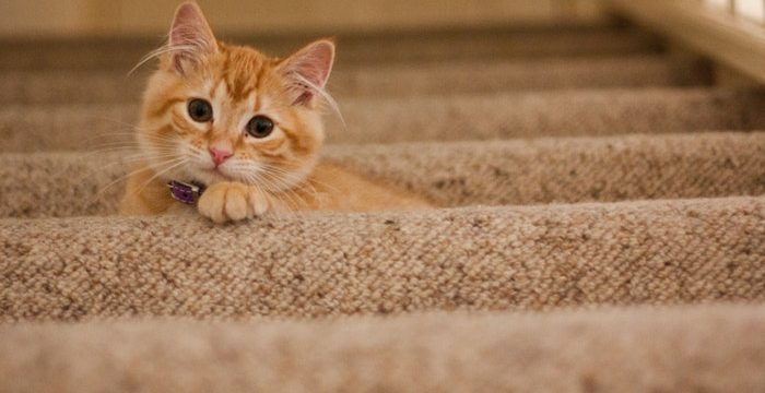 Best Vacuum For Cat Litter