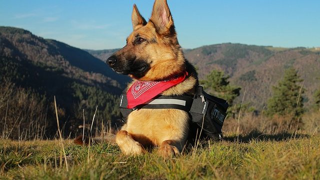 best food for german shepherd puppy