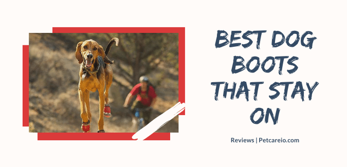 best dog boots that stay on