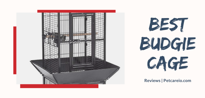 Best Cages for Budgies and Parakeet