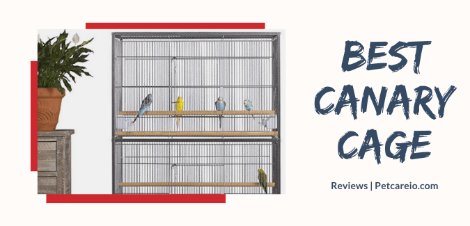 Best Cages for Canary & Finch -Home for Your Small Birdy!