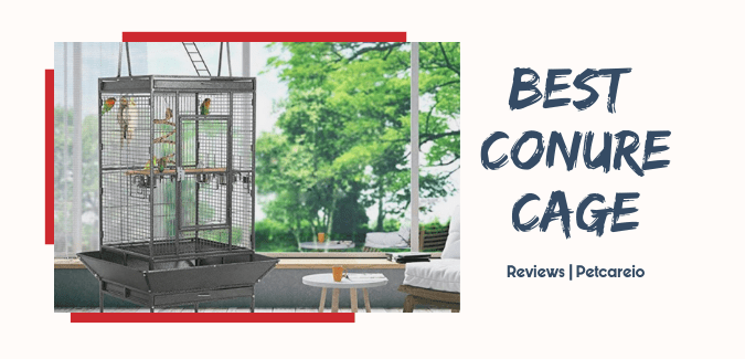 Best Conure Cage [Review & Guide]