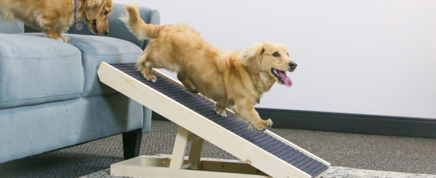 When Does My Dog Need a Ramp?: Back To Basics