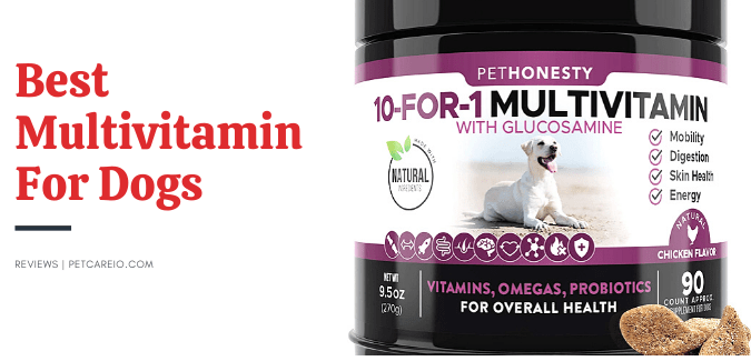 Best Multivitamin For Dogs (Vet Recommended)- Best Dog Health Supplements!