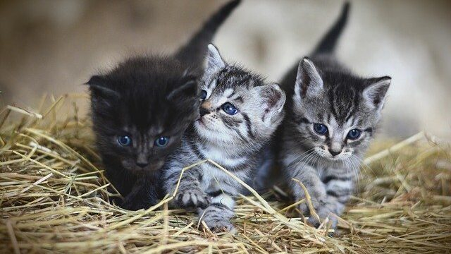 What Kind of Cat Do I have? Know the Differences