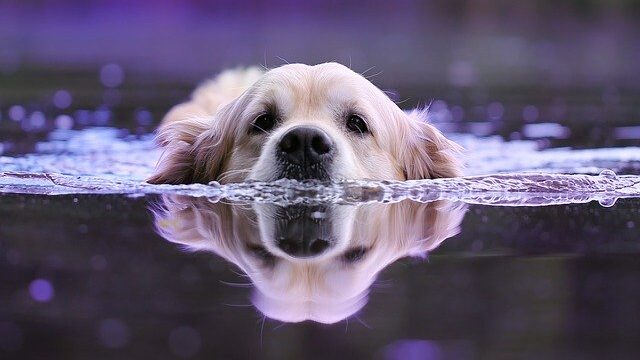 How long can a dog go without water?